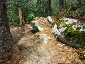 Rock Feature on the Pitch Pine Trail