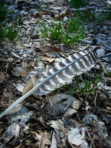 Rough Creek Watershed Feather