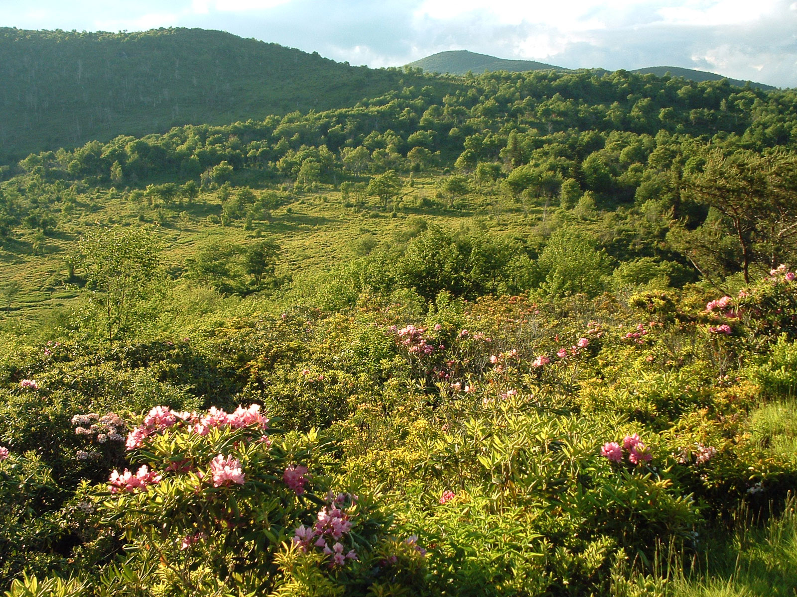 Graveyard Fields in spring, as seen from the (now closed) parking area on the Blue Ridge Parkway