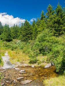 Flat Laurel Creek Trail Stream Crossing