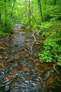 Creek Above Crabtree Falls