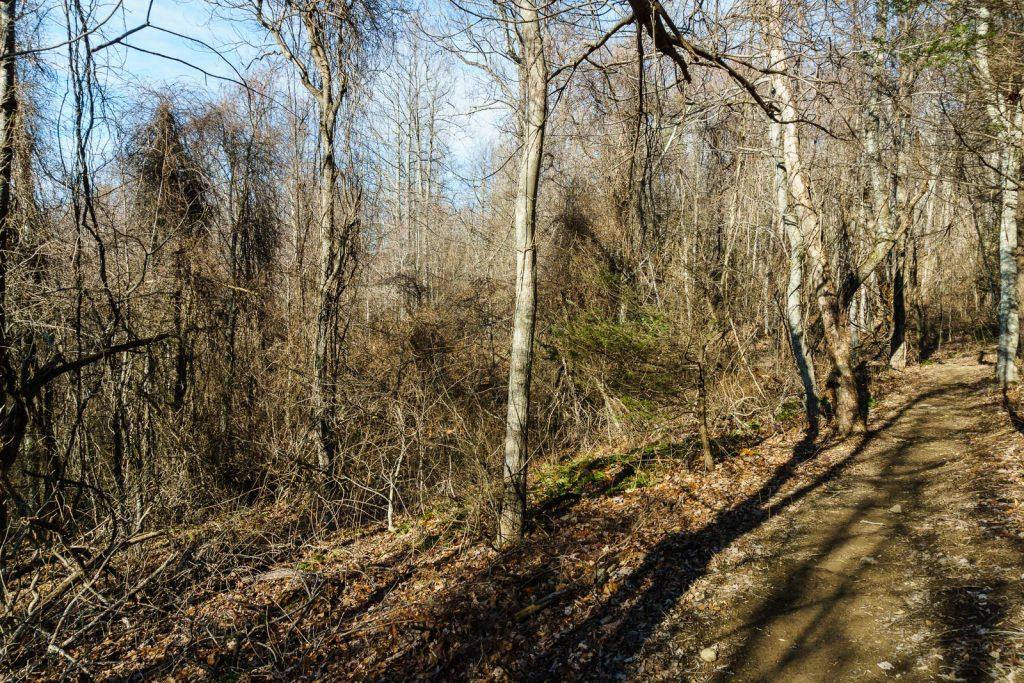 2014-12-31_upper-hickory-nut-gorge_trombatore-trail-invasive-woods