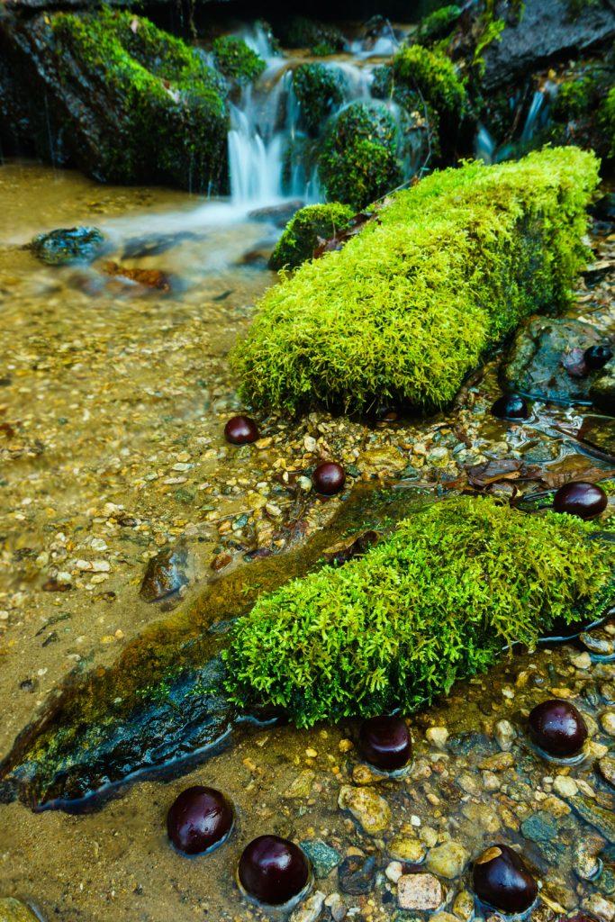 2014-12-31_upper-hickory-nut-gorge_trombatore-trail-stream-buckeyes