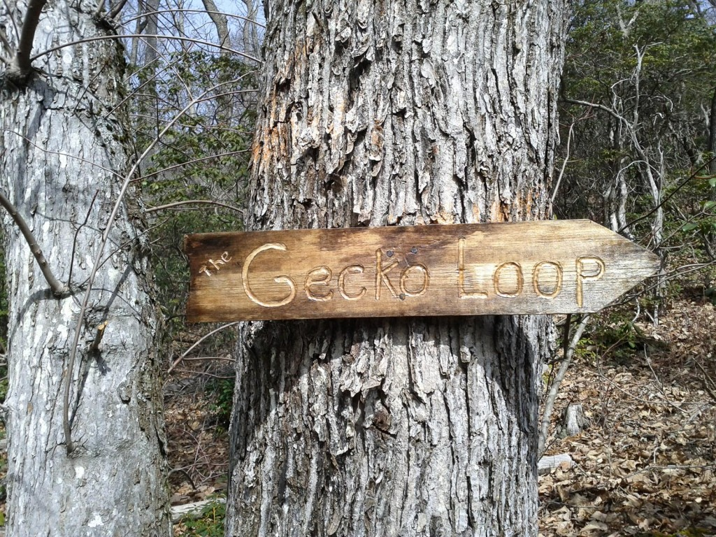 New looking sign nailed to a tree, at the top of a clearing in Shope Creek.