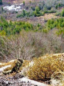 Lichens on Blackrock Overlook
