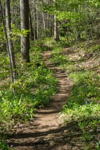 Trail Through Flowers in Shope Creek
