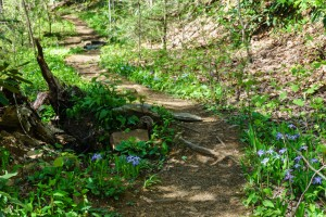 Unnamed Trail at Shope Creek