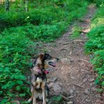 Darla on the Trail in Shope Creek