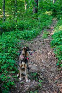 Darla on the Trail in Shope Creek