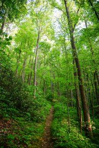 Logging Road Trail in Shope Creek