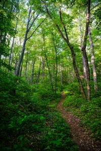 Steep Trail in Shope Creek