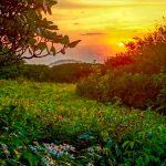 Sunset and Flowers in Craggy Gardens