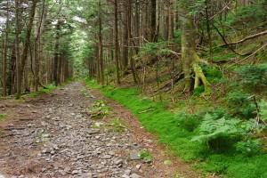 Appalachian Trail on Roan High Knob