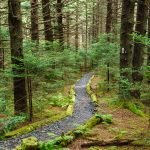 Appalachian Trail in Mossy Spruce-Fir Forest