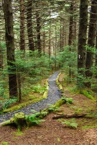 Appalachian Trail in Mossy Spruce-Fir Forest