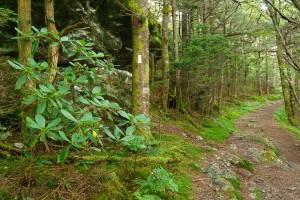 Appalachian Trail on Roan Mountain
