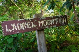 Lichen-Encrusted Laurel Mountain Sign