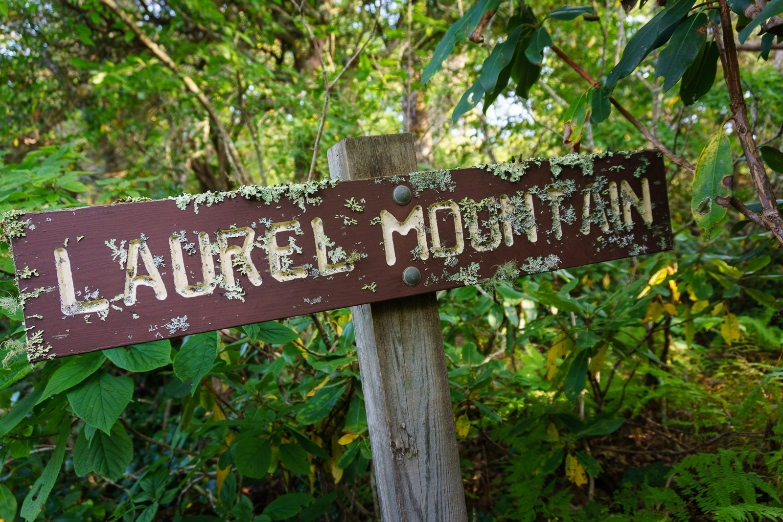 Lichen-Encrusted Laurel Mountain Sign