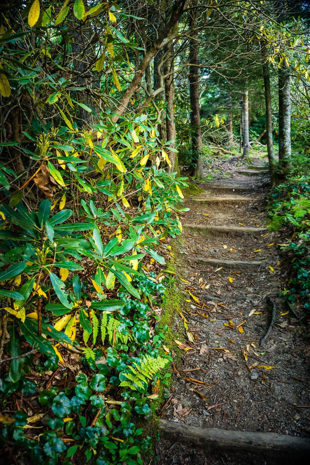 Buck Spring Trail Steps