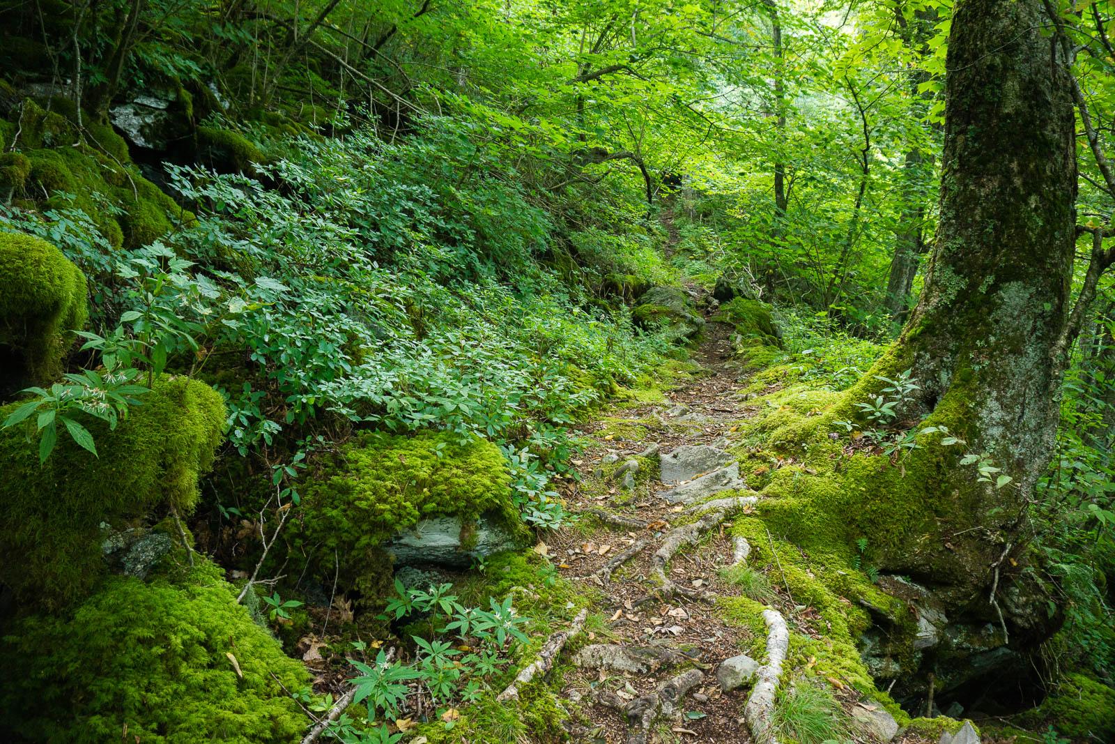 Mosy Laurel Mountain Trail