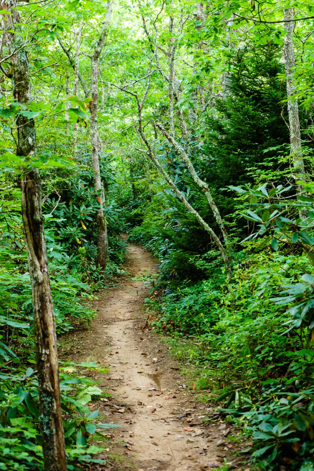 Pilot Rock Trail