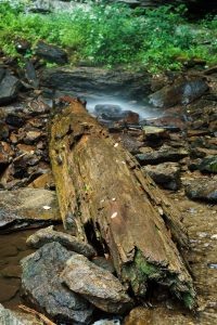 Log Under Douglas Falls