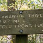 Tanawha Trail Cold Prong Loop