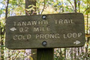 Tanawha Trail Cold Prong Loop