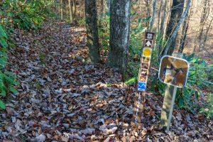 Laurel Creek Trail at Squirrel Gap