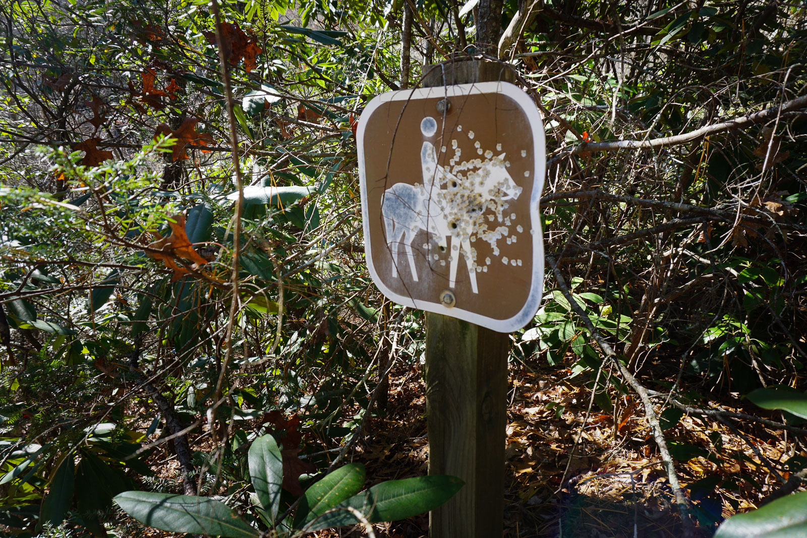Shot-up Horse Sign
