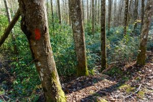 Steep Section of Poundingmill Trail