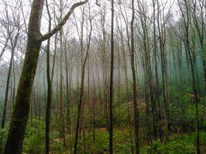 Layer of Fog along Toms Creek