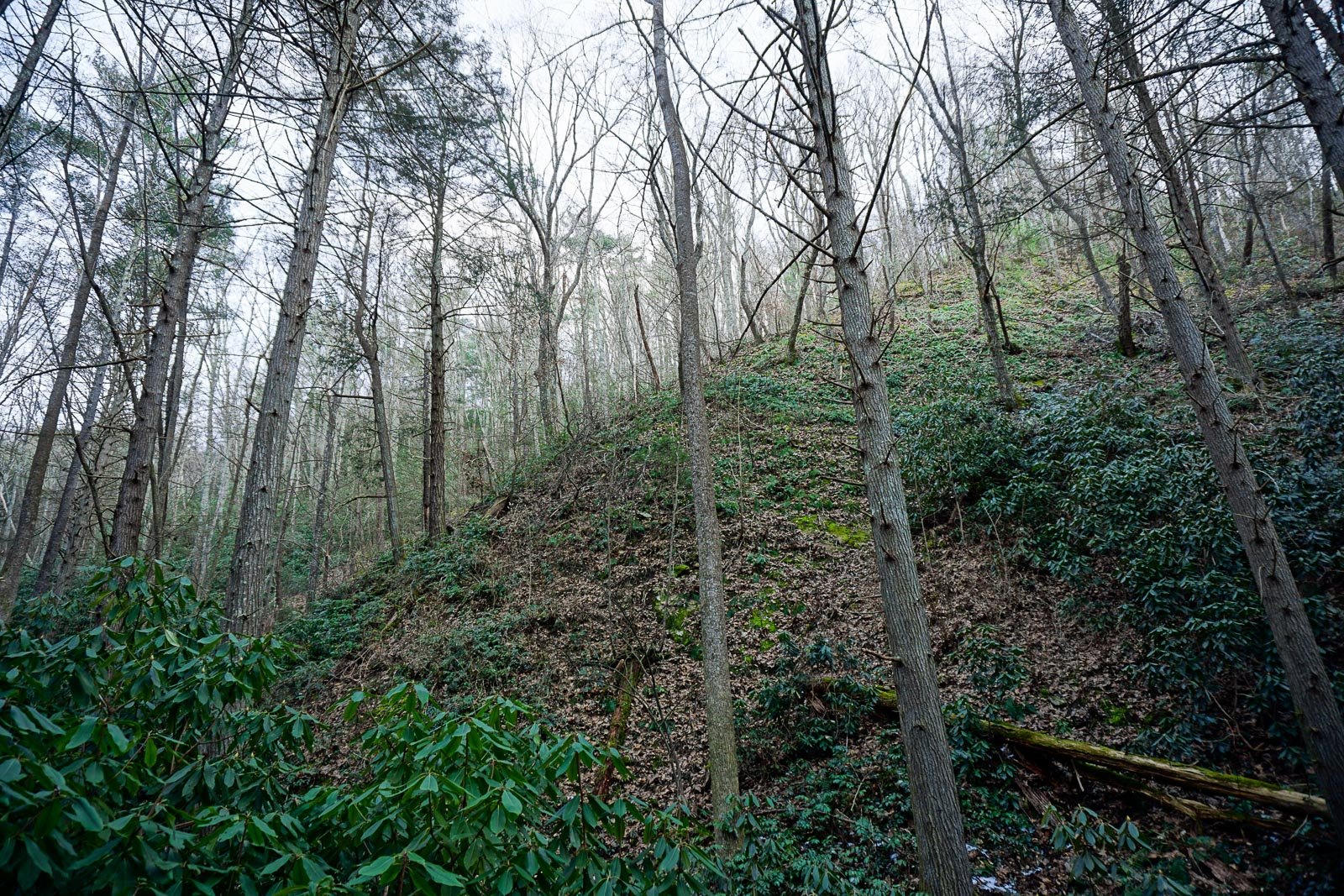 Steep Slope beside Pump Gap Loop Trail
