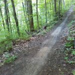 Little Hickory Top Trail