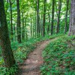 White Blaze Trail