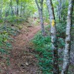 Yellow Blazed Snowball Trail