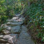 Rocks and Galax on the Bridge Trail