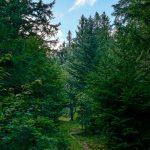 Grassy Ridgeline Trail