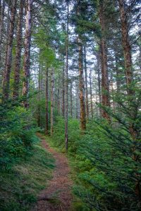 Mountains to Sea Trail through Spruce Forest