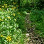 Buncombe Horse Range Trail Wildflowers