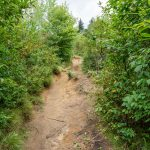 Graveyard Fields Loop Trail Erosion