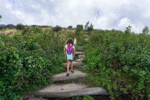 Log Steps on the Art Loeb Trail