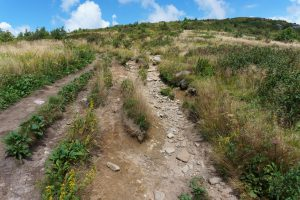 Multiple Eroded Paths on the Art Loeb Trail