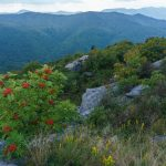 Mountain Ash on Sam Knob