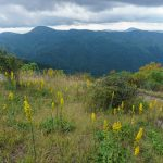 Goldenrod View on Sam Knob