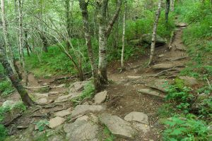 Sam Knob Trail Switchback