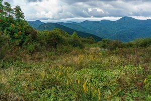 Shrubby Meadow on Sam Knob