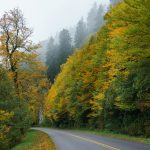 Fog and Fall Color on the Blue Ridge Parkway