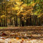 Linville Falls Picnic Area Parking Fall Color
