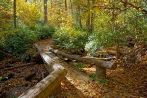 Cascades Trail Bridge in Fall Color